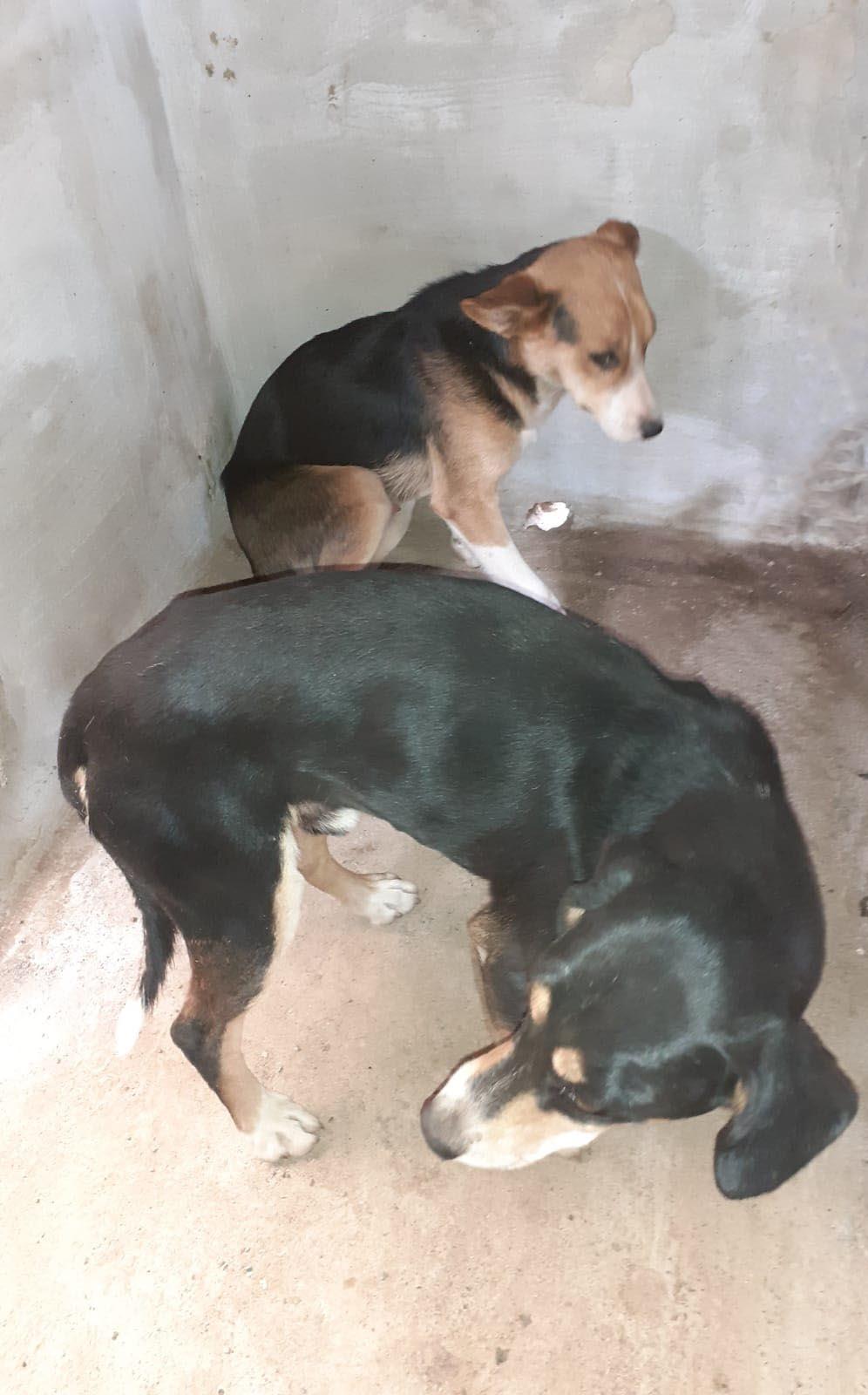 perros rescatados web