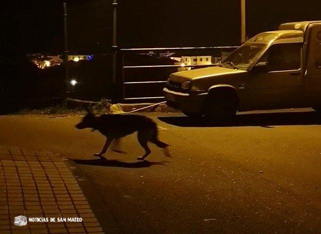 Un perro suelto y agresivo mantiene en vilo a vecinos de El Retiro