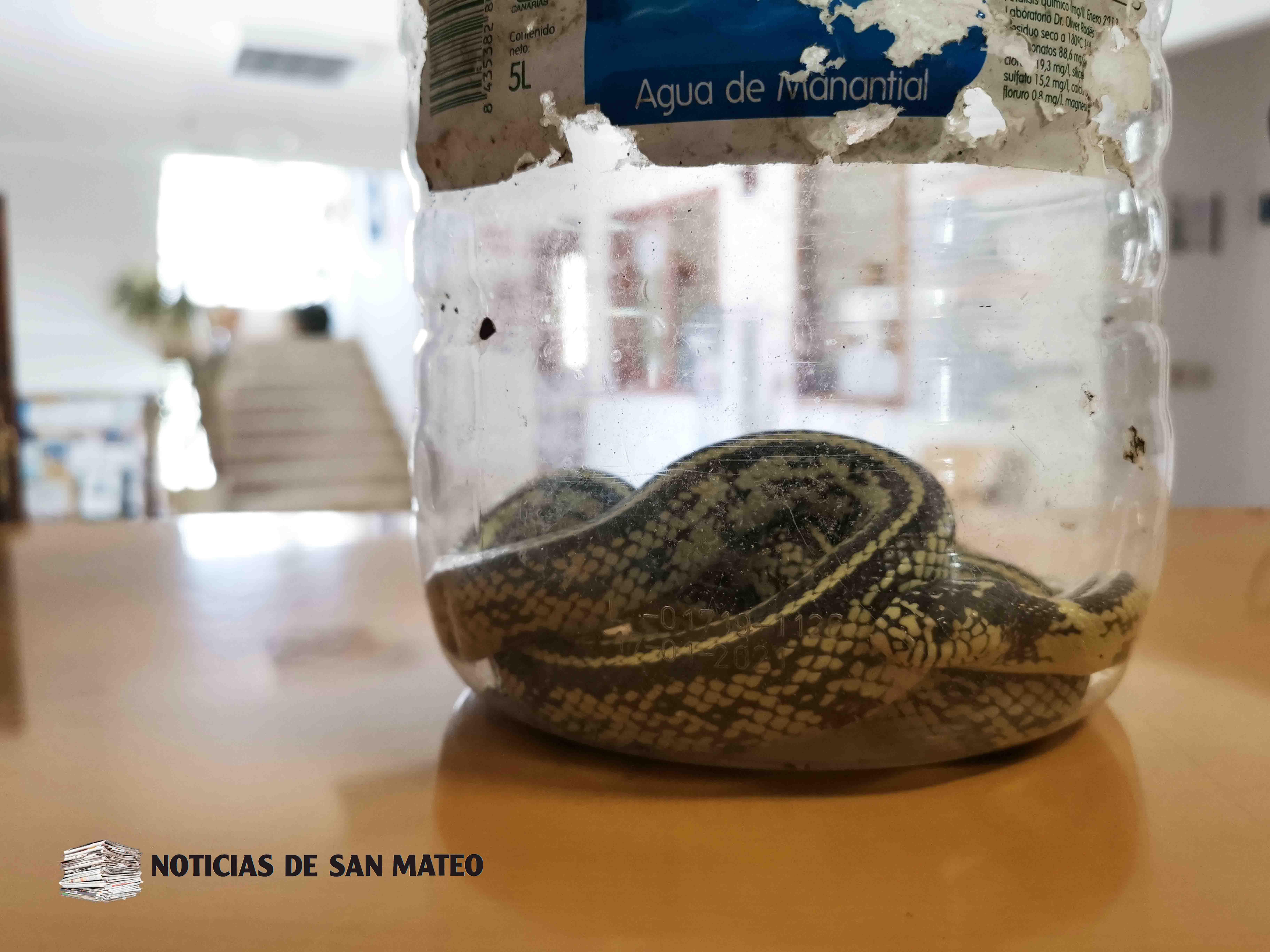 Aparecen nuevas serpientes californianas en San Mateo